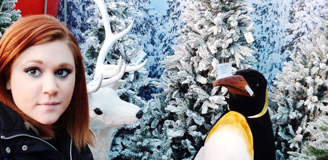 Winter Bianco Blue Luci Architecture Freddo Ghiaccio Inverno 2017 Ghiaccio Natale 2017 Pinguini Renna Funivia