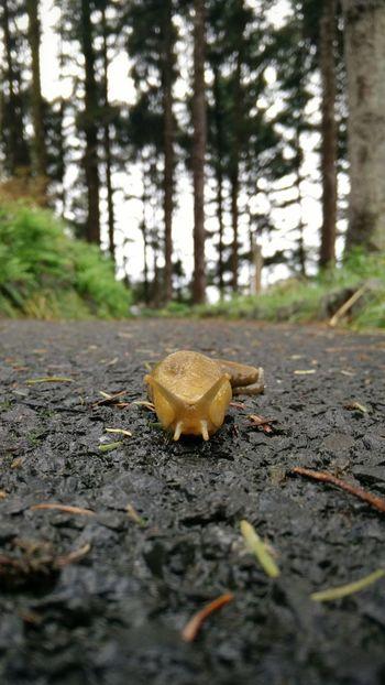 Snail Hunting Living Dangerously