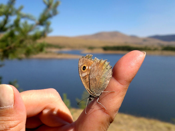 Beautiful butterfly standing still on the finger Serbia Animal Wildlife Animals In The Wild Butterfly Butterfly - Insect Close-up Day Finger Focus On Foreground Hand Holding Human Finger Human Hand Nature One Animal One Person Outdoors Zlatibor EyeEmNewHere