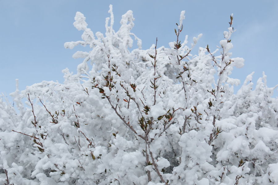 Record breaking snow depth, 13 meters = 40 feet - Winter Wonderland Beauty In Nature Branch Cold Temperature Day Heavenly Ski Resort Low Angle View Nature No People Outdoors Sky Snow Sunlight Tree White Color Winter