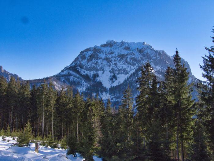 Winter on grünberg mountain