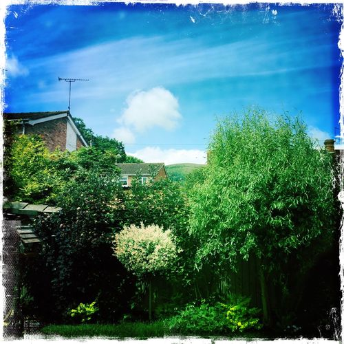 As above so below Beauty In Nature Blue Cloud Cloud - Sky Garden Green Growth Outdoors Puff Ball Cloud Sky
