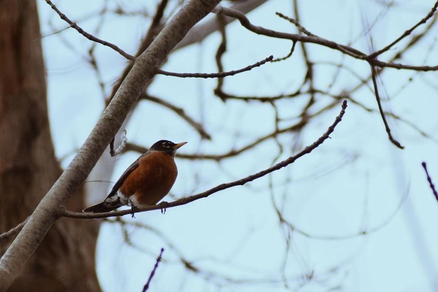 Bird Branch Wilderness Perching Animal Animals In The Wild No People Outdoors Tree Animal Wildlife Bird Photography Beauty In Nature Bird Watching Birds Of EyeEm