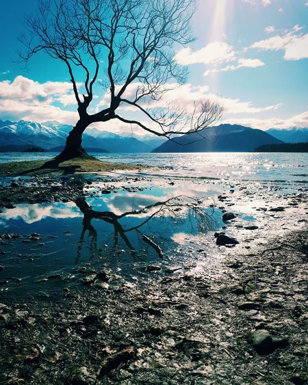 That Tree That's Normally In The Lake, That Isn't In the Lake.. Leaning Tree Water Reflection Shadow Bare Tree Rock Puddle Lake New Zealand Scenery VSCO Vscocam Water Tree Mountain Reflection Sky Horizon Over Water Landscape Calm Single Tree Lakeside Lone