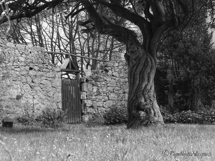 Outdoors No People Blancoynegro Blackandwhitephotography Black And White Collection  Pola De Siero Outdoor Photography Garden Tree Nature Oldgarden