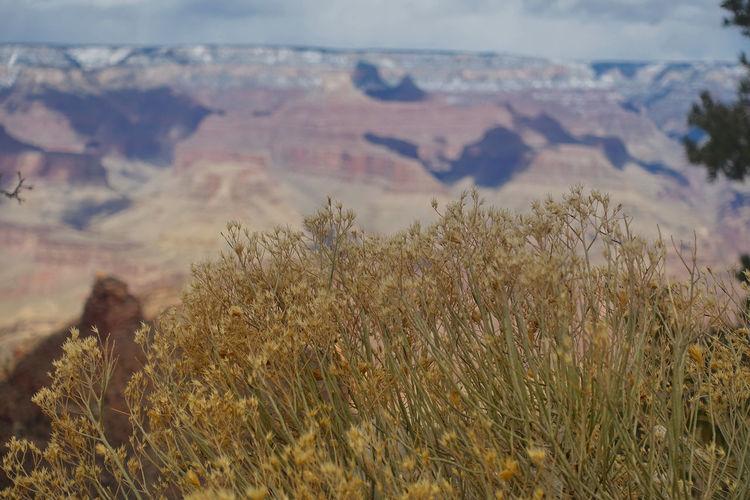 vast canyon