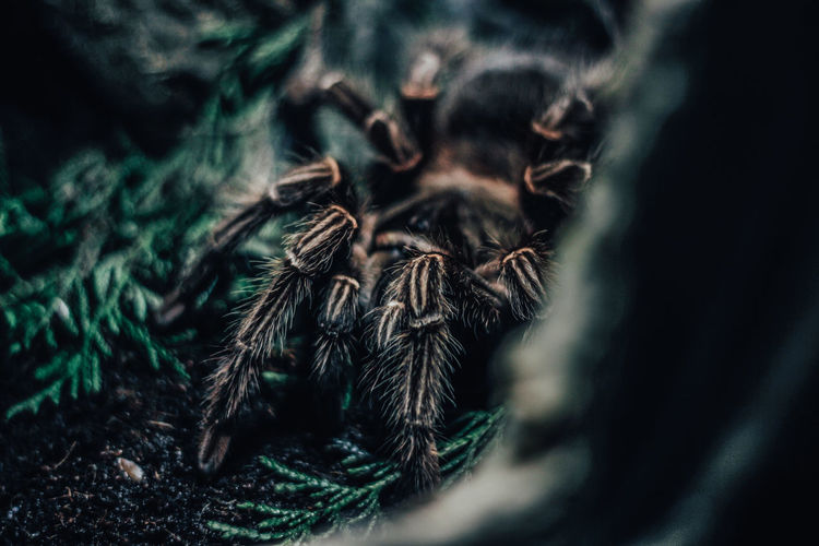 Spider for the screen saver on the wallpaper of the company Close-up Selective Focus Arachnid Spider Arthropod No People Invertebrate Day One Animal Insect Plant Nature Growth Animal Animal Themes Plant Part Outdoors Zoology Leaf Macro