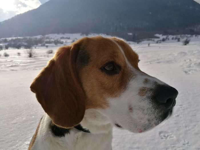 Puppy Dog Winter Close-up Cold Temperature Outdoors Mountain Snow One Animal Pets First Eyeem Photo