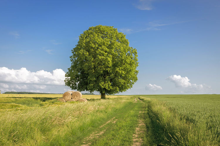tree on field against sky Agriculture Baum Beauty In Nature Cloud - Sky Day Environment Field Grass Green Color Growth Juni Land Landscape Nature No People Outdoors Plant Rural Scene Scenics - Nature Sky Tranquil Scene Tranquility Tree