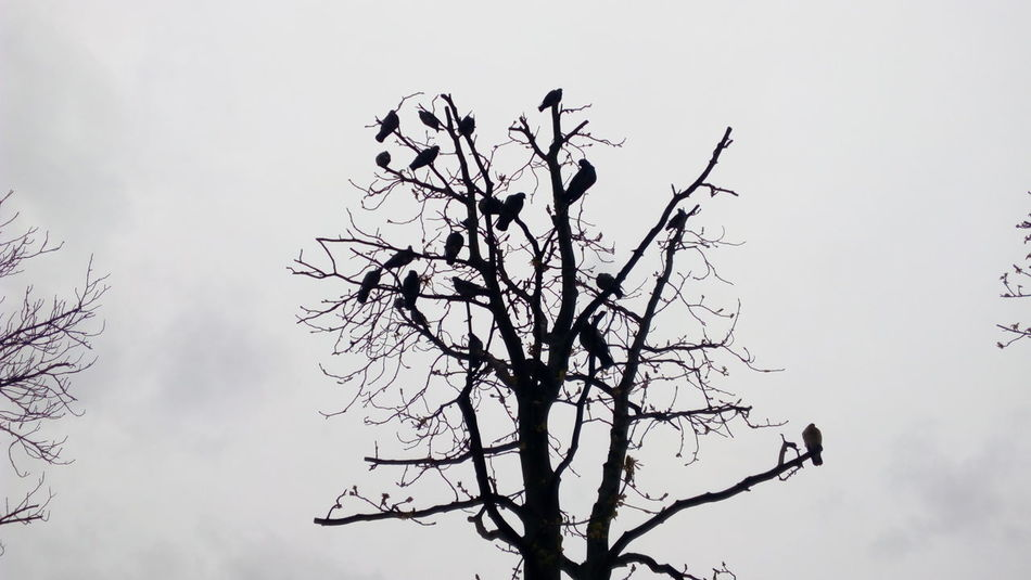 Tree Birds🐦⛅ Birds_collection Birds Of EyeEm  Tree And Birds birds like a leaves Without Filters No Edit No Filter Mobilephotography