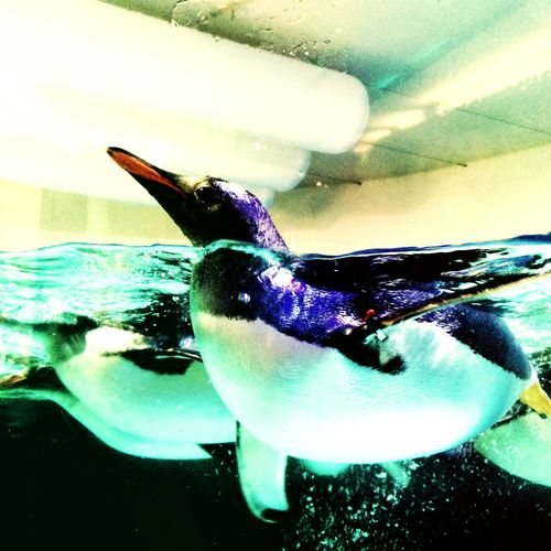 Penguins say hello Penguin Melbourne City Aquarium EyeEm Animal Lover