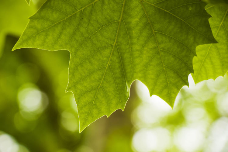 Green color in the nature. plants and leaves in spring time. green background. nature background.