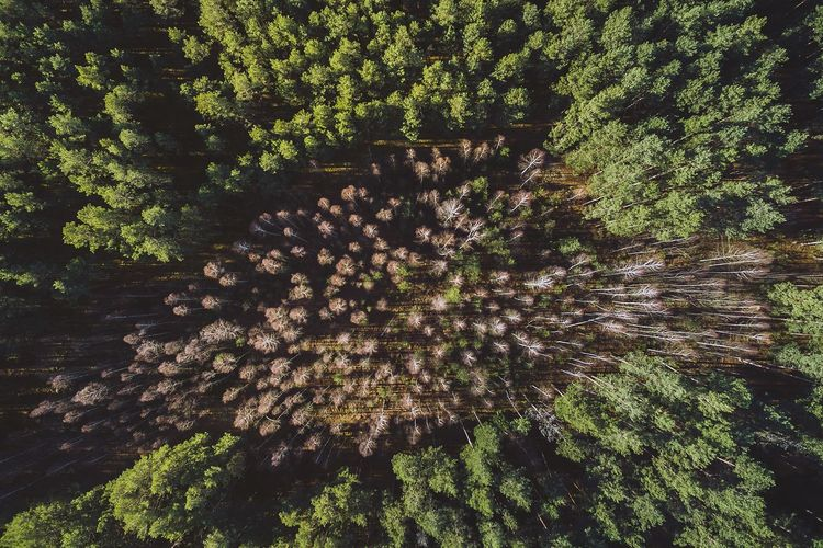 High angle view of trees