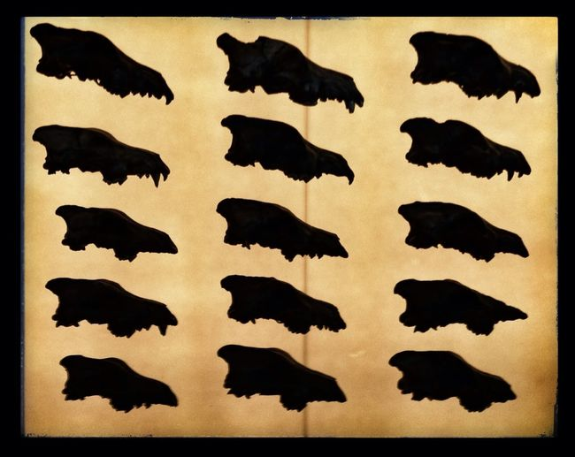 Fossil Dire Wolf Skulls Silhouette Repeat Repeat