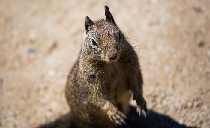 Close-up Curiosity Mammal Rodent Squirrel