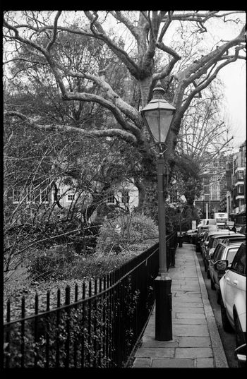 London lamppost Black & White Black And White Blackandwhite Blackandwhite Photography City EyeEm Best Shots EyeEm Nature Lover Film Film Photography Filmcamera Filmisnotdead Lamppost Nikkormat FS (1965) Pavement Street Street Photography Streetphoto_bw Streetphotography Tadaa Community Tree Tree Trees Trees And Sky Urban