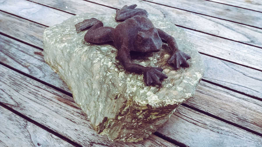 Close-up Day Fairy Tale Fairytale  Frog Frog King Gold Colored High Angle View No People Rock Stone Swimming Table Textured  Wood - Material Wood Grain