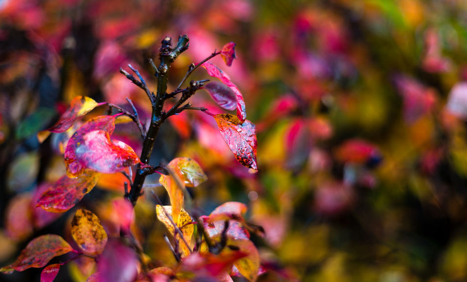 Fall Beauty Fall Colors Beauty In Nature Branch Close-up Cold Day Fall Fall Leaves Flower Flower Head Freshness Nature Outdoors Petal Plant