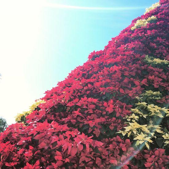Jardines de Mexico 1