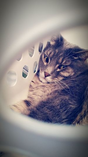 One Animal Animal Head  Pets Whisker Domestic Animals Eyeem Best Shots - Animals Animal Themes