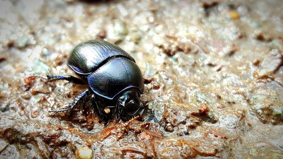View of beetle on rocks