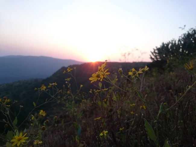 Plant Flower Nature Sunset Field Wildflower Uncultivated Sun Growth Grass No People Landscape Dawn Sunlight Outdoors Beauty In Nature Silhouette Tranquility Mountain Herb Beauty Nofilternoedit Zoomandsee
