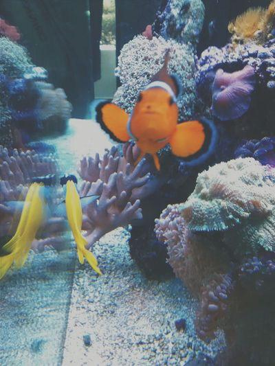 """Procurando Nemo"" 🐠🐟🐡🐚 Brazil Saopaulo Vet  Veterinary Veterinarian Fish Nemo Water Acquarium Aquarium"