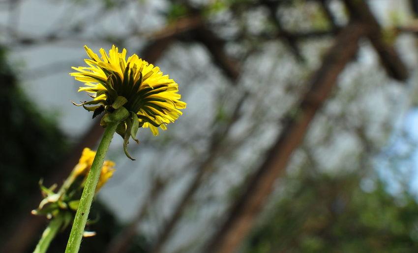 Flower Nature Sunshine