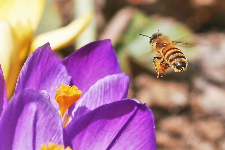 Close-up of bee pollinating on fresh flower