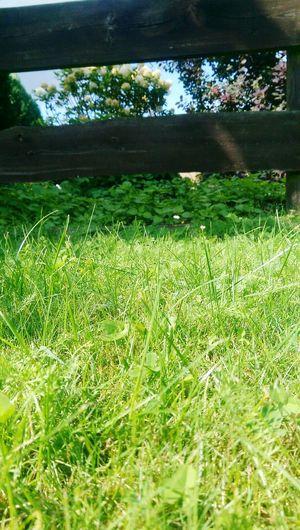 Sommer Sonne Freizeit Tag Genießen Dorfkind Growth Grass Nature Green Color Agriculture Field No People