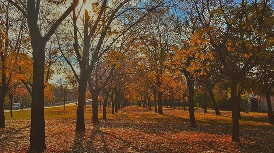 Umcollective Mik Ikozosseg Autumn thisisbudapest ig_budapest tree_captures mist_vision vsco_hun vscohungary in_europe insta_budapest