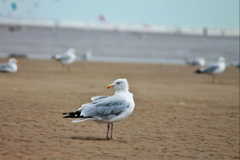 seagulls on