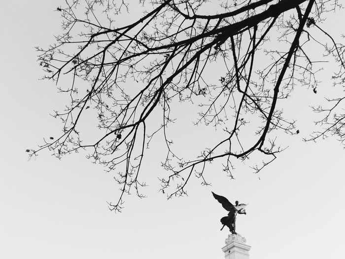 Low angle view of silhouette man jumping on tree against sky