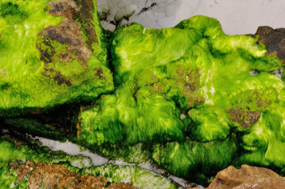 Beauty In Nature Close-up Day Green Color Moss Moss And Lichen Mossporn Nature No People Outdoors