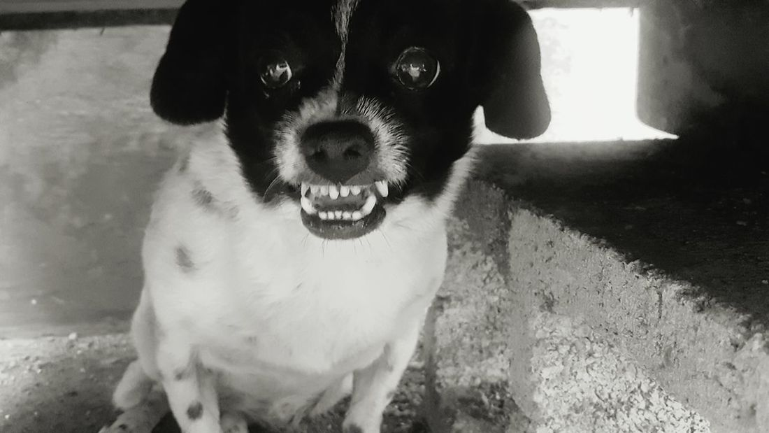 Dogsmiles Cheese! Dog Love Dog Photography Smiling Smilerforever Jurphoto