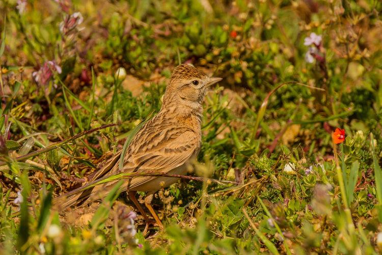 Bird perching on land