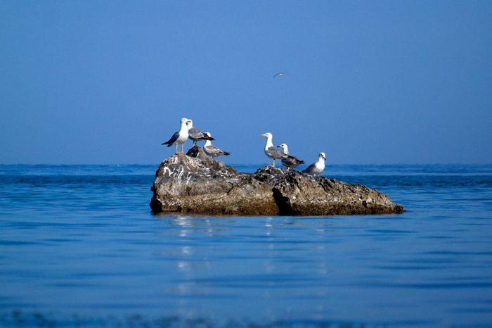 Gull Gulls Island Life Islandlife Rocks And Water Seascape Sea And Sky Sea Birds Bird Bird Photography Birds In A Rock Gulls And Sea Gulls In A Rock