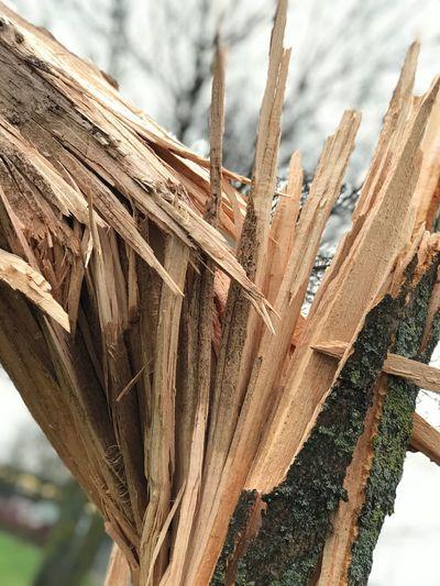 Broken tree Storm Broken Tree Wood - Material Day No People Outdoors Close-up Nature Tree