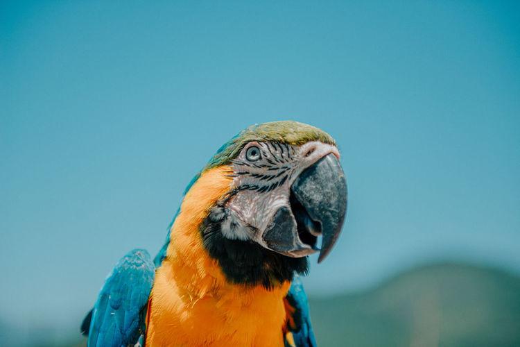 Close-up of bird against blue sky