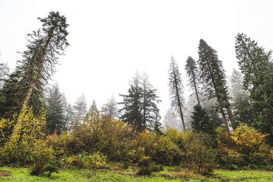 Hoyt Arboretum / Forest Park in Portland, Oregon, USA. Fall time foggy and rainy day. Autumn Beauty In Nature Clear Sky Day Forest Grass Growth Landscape Nature No People Outdoors Scenics Sky Tranquil Scene Tranquility Tree