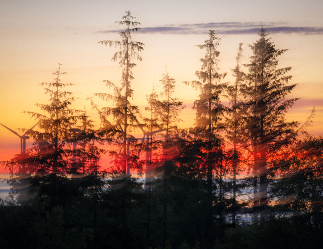 Denmark Motion Blur Sea And Sky Skycolors Sunset Silhouettes Trees And Sky Treescape Windmill DSLR APS-C