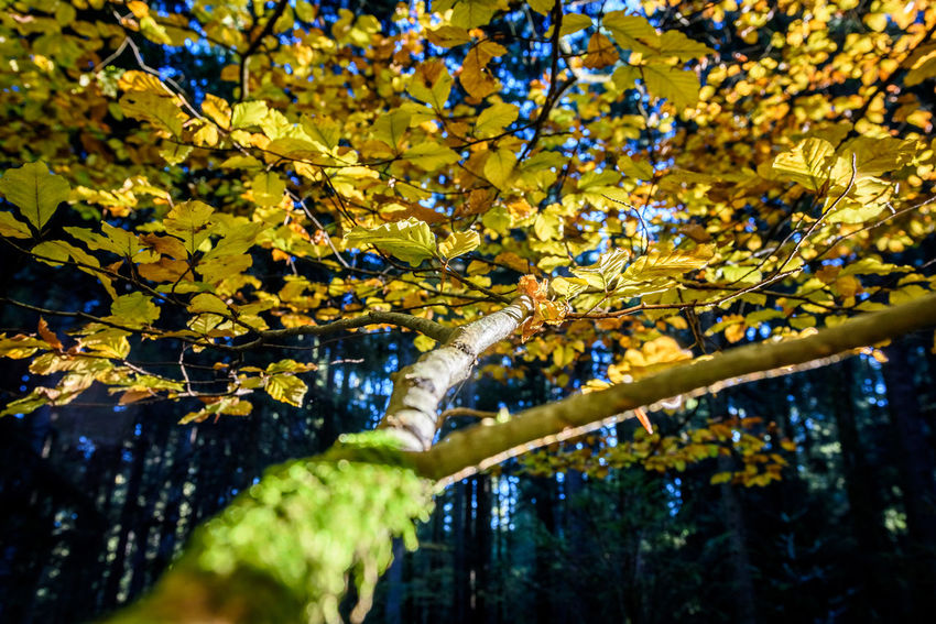 Autumn Beauty In Nature Branch Change Close-up Day Fall Forest Leaf Nature No People Outdoors Scenics Tranquility Tree Water
