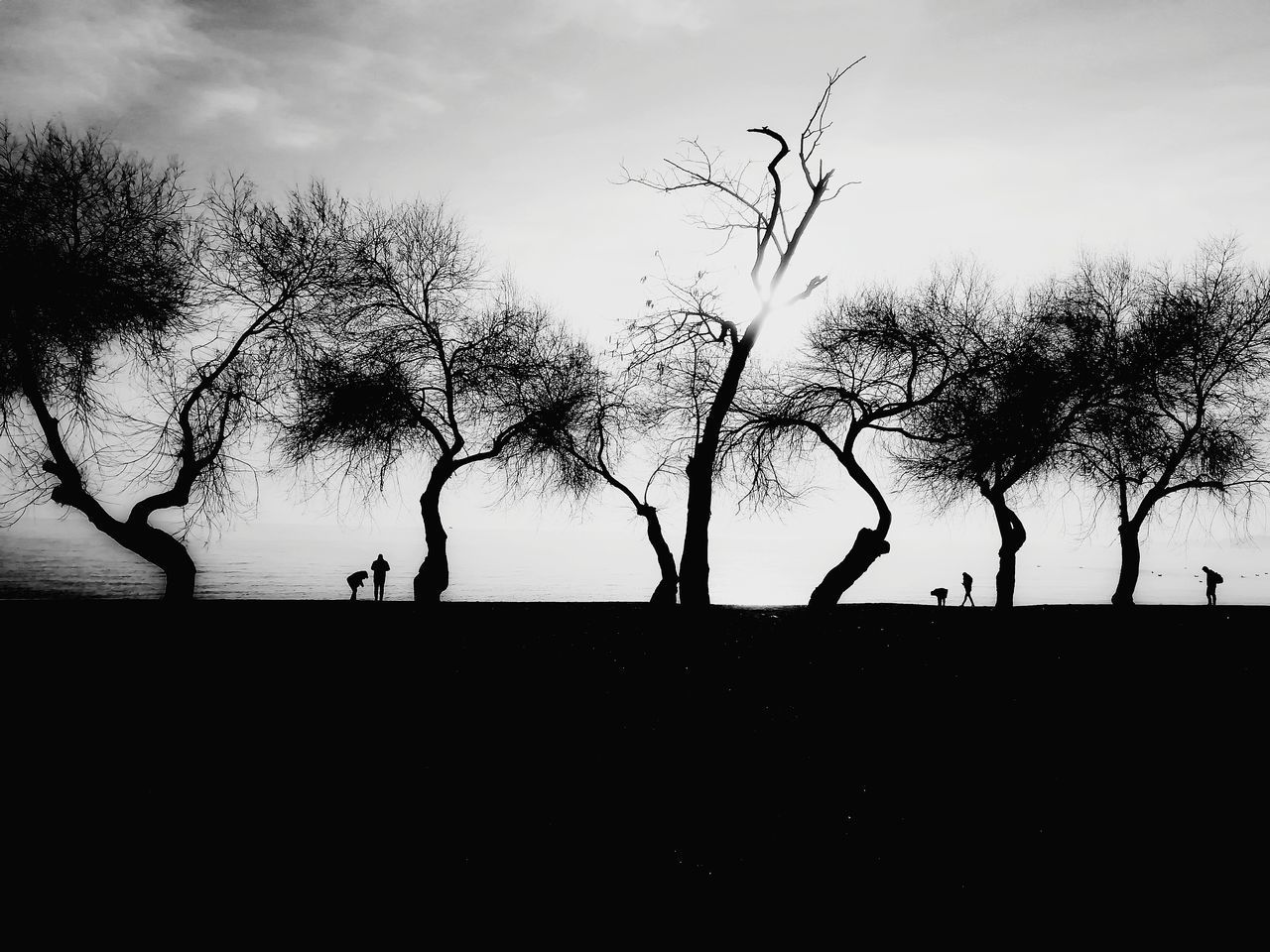 silhouette, tree, sky, plant, nature, group of people, bare tree, lifestyles, real people, men, cloud - sky, people, branch, outdoors, beauty in nature, leisure activity, tranquility, tranquil scene, women, land
