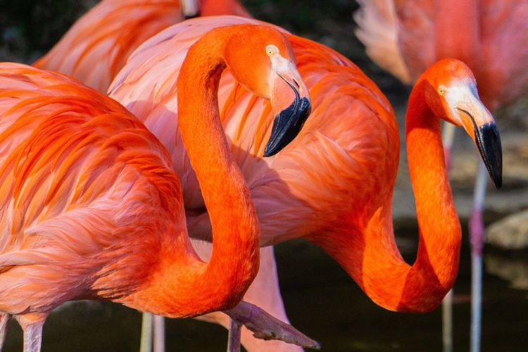 Flamingo Discussion Sony A6000 Animal Themes Flamingo Portrait Orange Color Close-up Animal Animal Themes No People Day Animal Representation High Angle View Animals In The Wild Art And Craft Creativity Representation Focus On Foreground Group Of Animals Pattern Vertebrate Outdoors Animal Wildlife Orange Fish