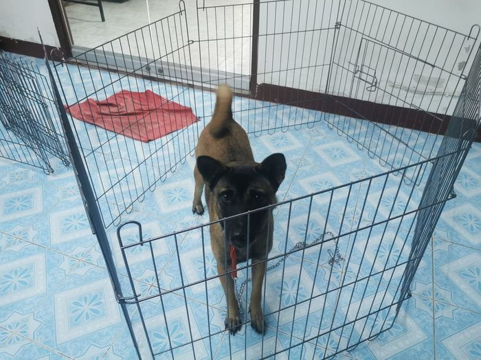 High angle portrait of dog in cage