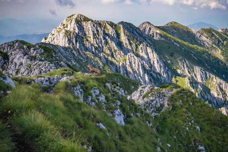 Mountain goat on mountain peak