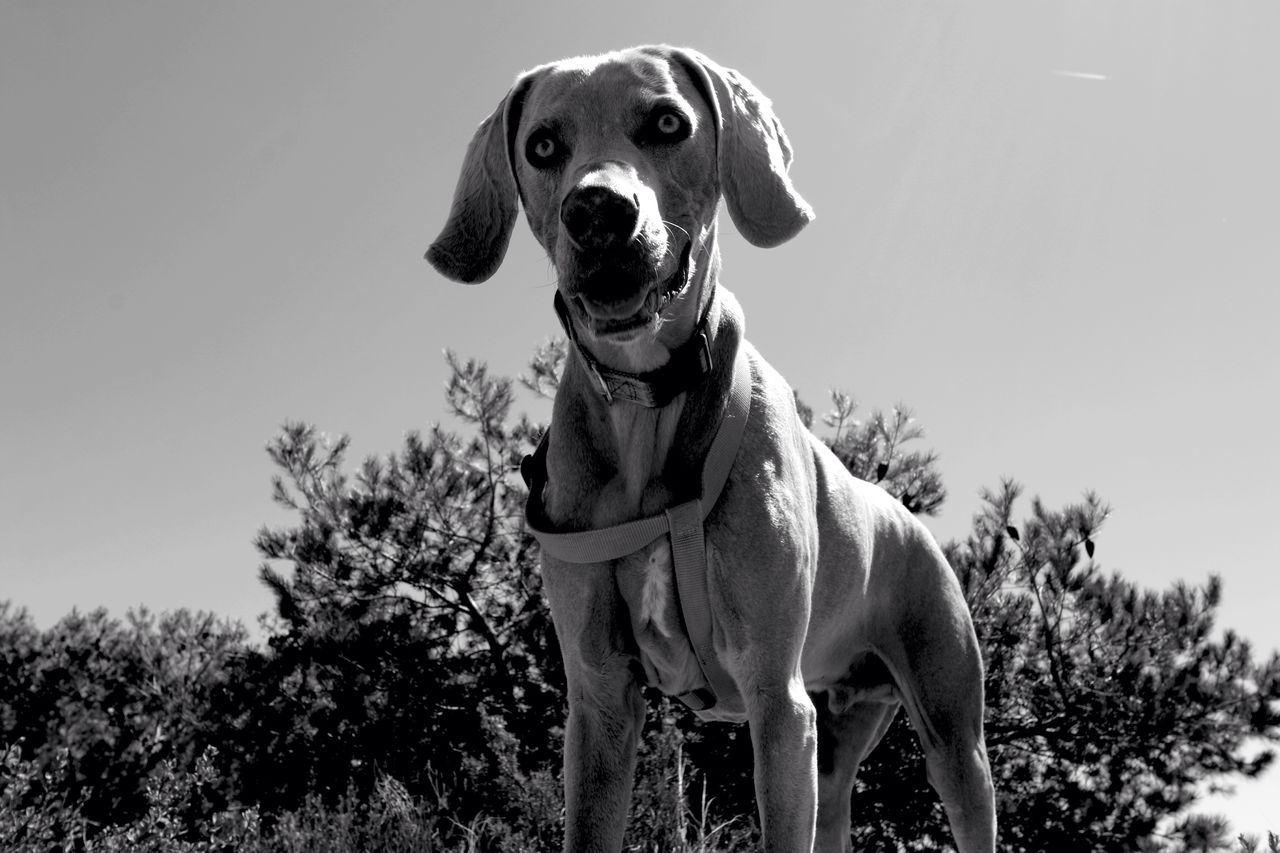 PORTRAIT OF DOG STANDING ON TREE AGAINST SKY