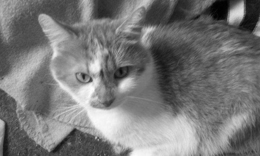 Charlie ♥ Heartforcats Love