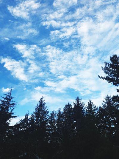 Fabulous Sky