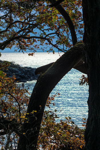Arbutus Madrona Tree Tree Beauty In Nature Branch Day Growth Land Nature No People Outdoors Plant Scenics - Nature Sea Sky Sunlight Tranquil Scene Tranquility Tree Tree Trunk Trunk Water